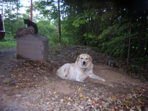Murphy in one of his bunkers and Mozart on the wellhouse.  Sometimes Murphy makes tiny bunkers for the cat.